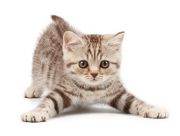 Name:  playful_kitten.jpg Views: 117 Size:  13.0 KB