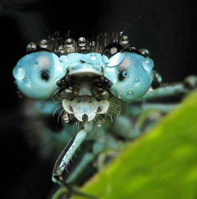 Name:  Beautiful Close - Up (10).jpeg Views: 176 Size:  53.1 KB