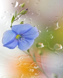 Name:  Flower_Dual_Clock.jpg Views: 77734 Size:  22.5 KB
