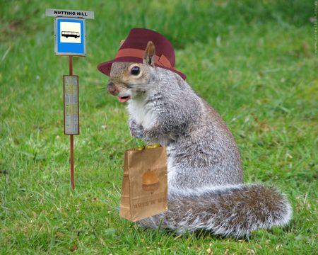 Name:  Squirrel_Waiting_at_The_Bustop.jpg Views: 308 Size:  39.0 KB