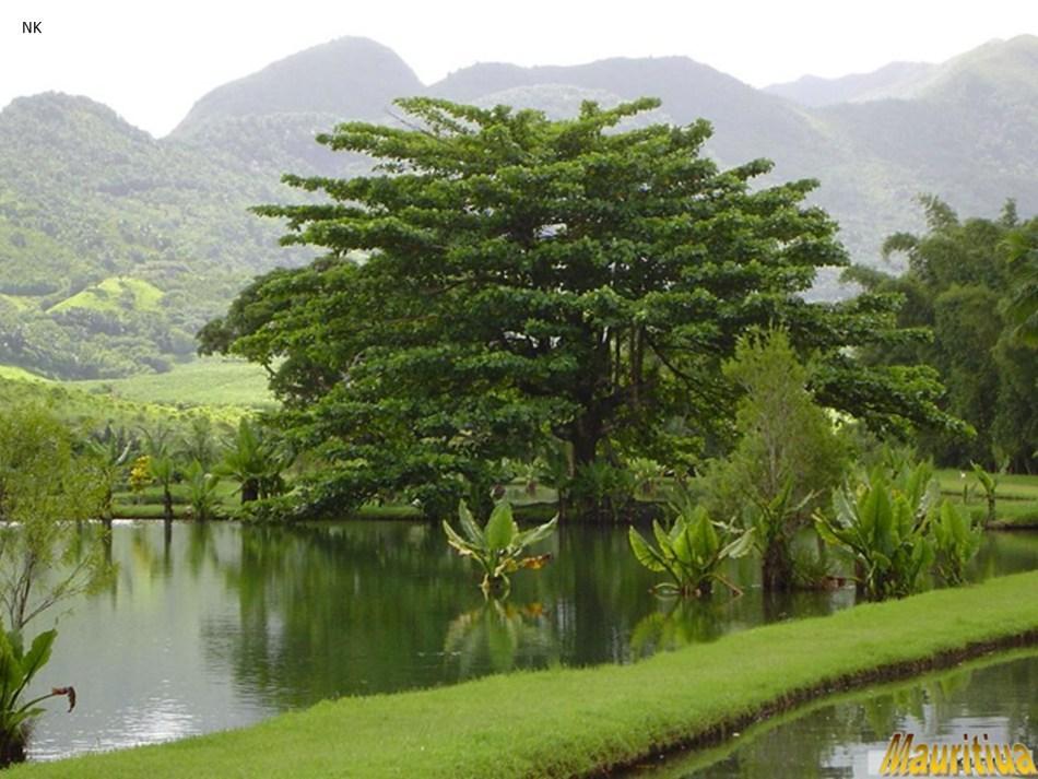 Beatiful Mauritius-slide4.jpg