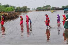 Name:  Ravages of Rain in Sindh.jpg Views: 169 Size:  11.9 KB