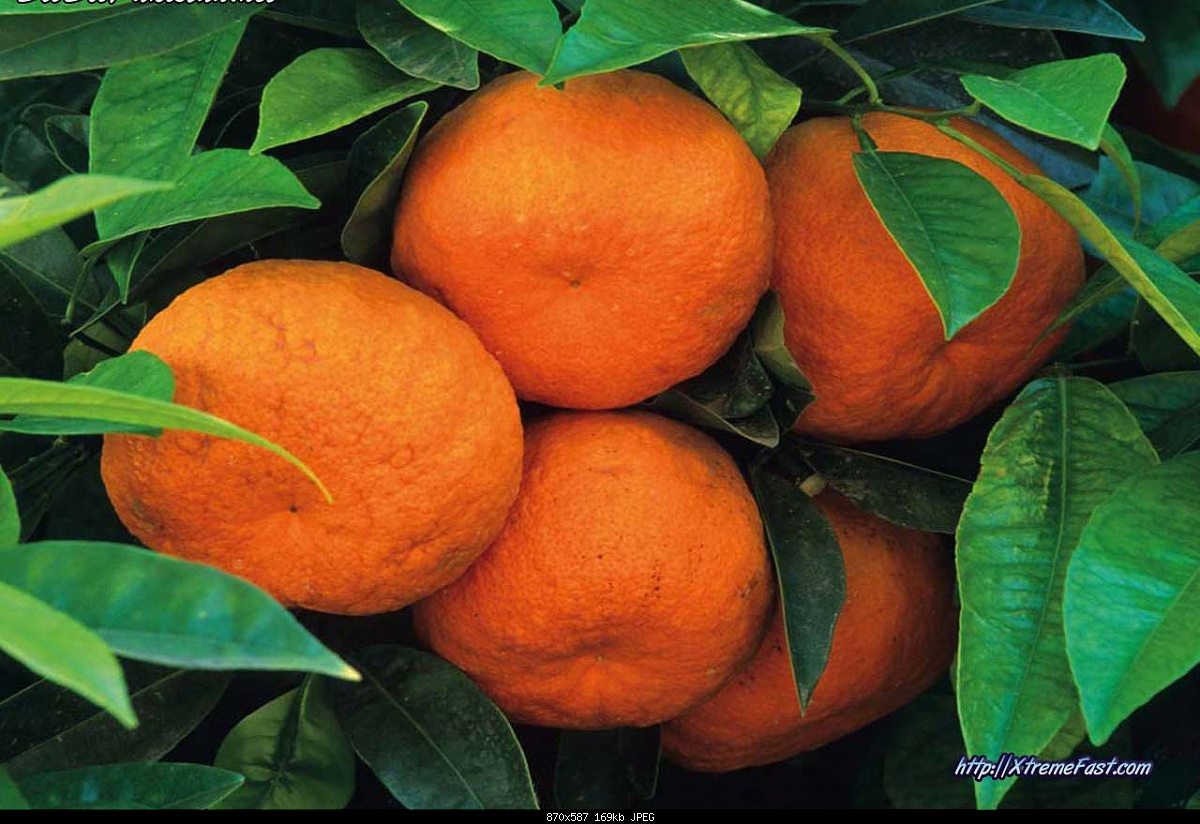 Winter Season in Pakistan-orange-kinow-.jpg