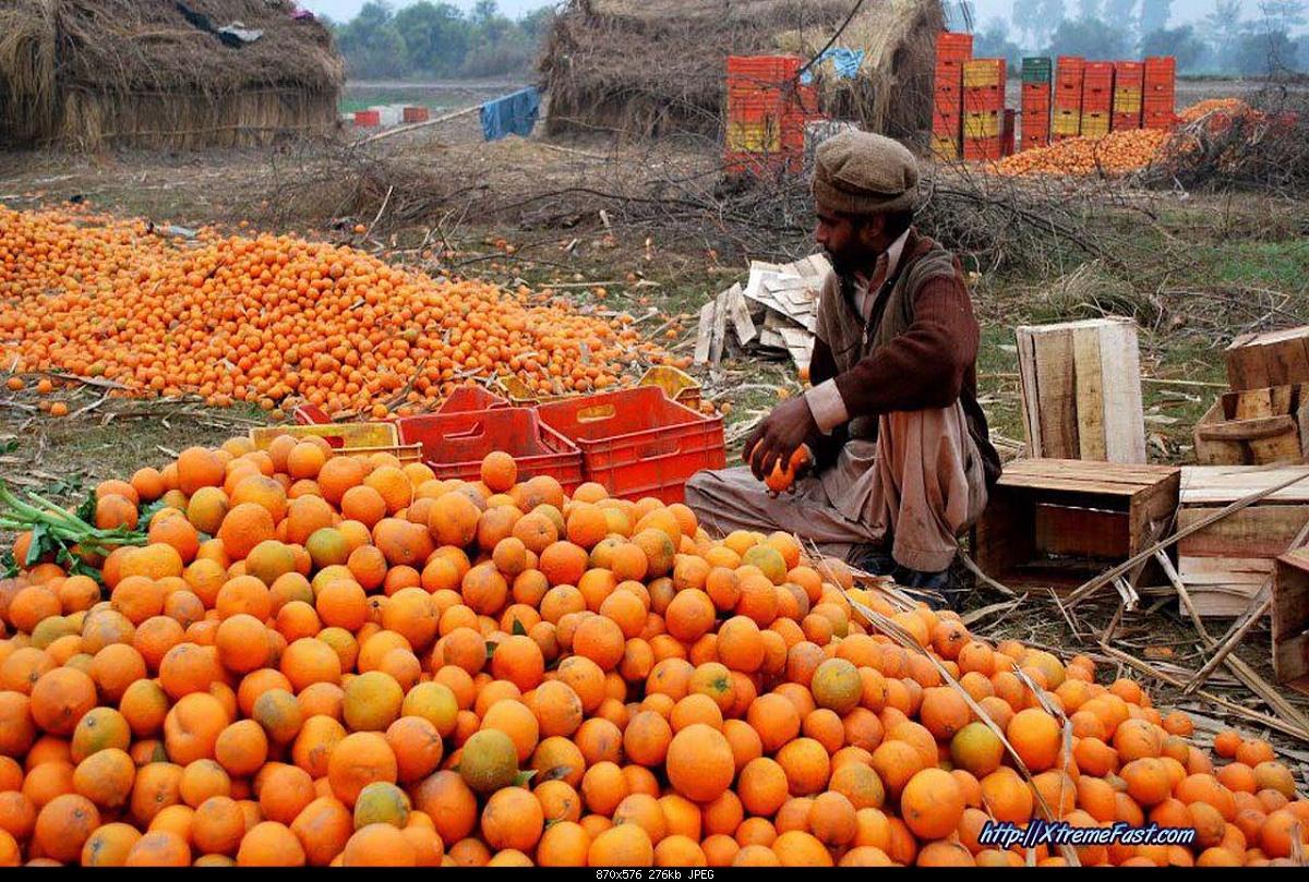 Winter Season in Pakistan-seasonal-fruit-kinow-malta-orange-kino-malta-musami-red-blood-fruiter-etc.jpg