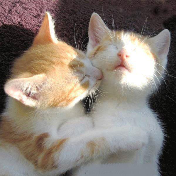 Name:  Funny-Cat-Photo1.jpg Views: 686 Size:  74.7 KB