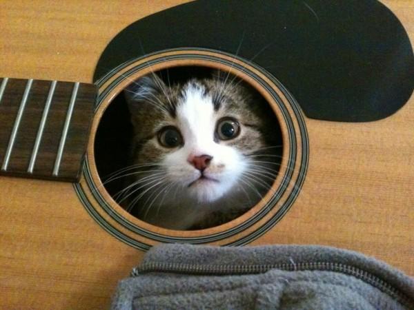 Name:  Funny-Cat-Photo6-600x450.jpg Views: 598 Size:  75.2 KB