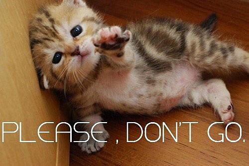 Name:  funny-cute-sad-cat-kitten.jpg Views: 1705 Size:  45.0 KB