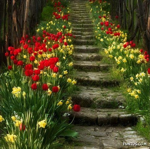 Name:  %20stunning_stairs_16.jpg Views: 232 Size:  71.0 KB