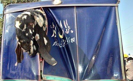 Name:  This is Pakistan (20).jpg Views: 55940 Size:  37.0 KB