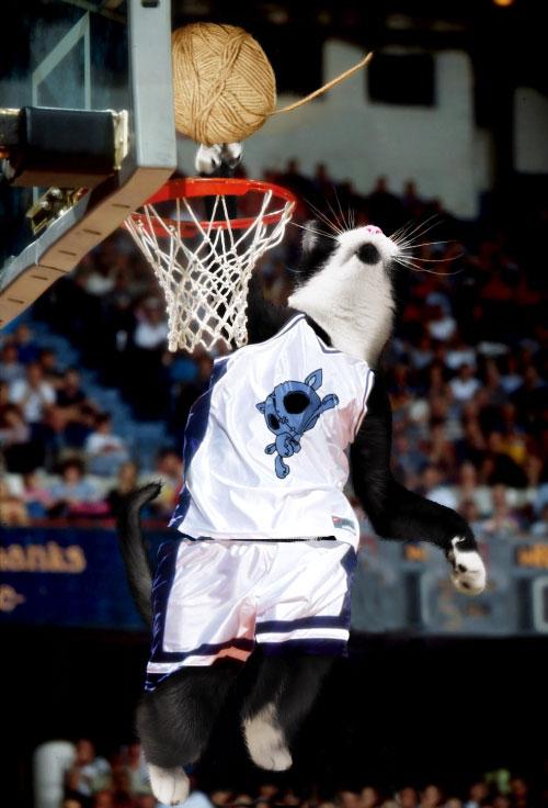 Name:  catsbasketball.jpg Views: 336 Size:  74.0 KB