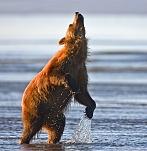 Dancing Bear[1] 728069