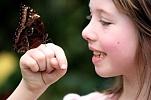 Exhibition of butterflies 004