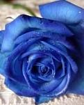 Blue Ross